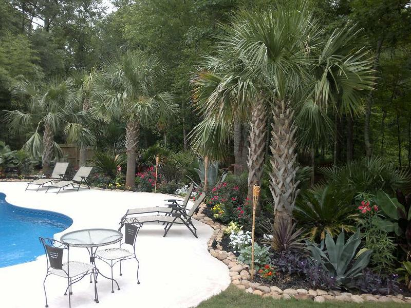 Palm Palms Trees Tree Company Business Contractor In For