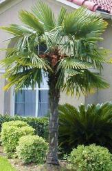Palm Palms Tree S Tree Company Business Contracto R Buy